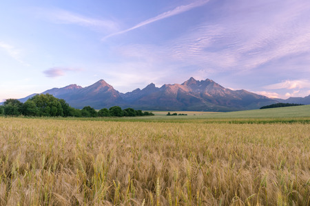grain fields: Morning view of High Tatras, Slovakia. Horizontal shot of mountains landscape with grain fields in a front. Beautiful morning light.
