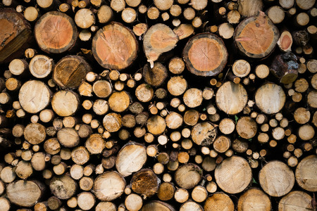 Vista detallada de madera cortada. Textura de troncos de madera.