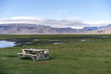 icelandic: Icelandic sheep hiding by wooden bench.