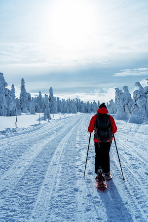 Winter sport activity. Woman hiker hiking with backpack and snowshoes snowshoeing on snow trail forest. Beautiful landscape with coniferous trees and white snow.