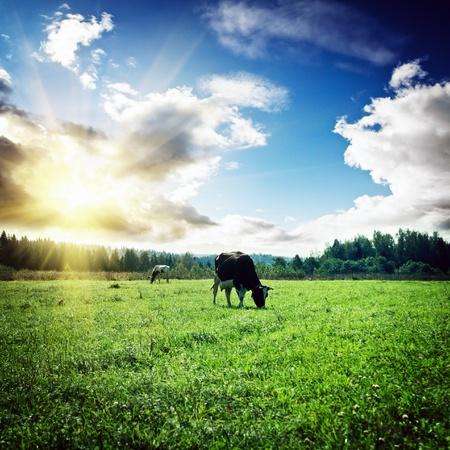 Pascolo e nuvole. Estate mattina tiro Archivio Fotografico - 15685052