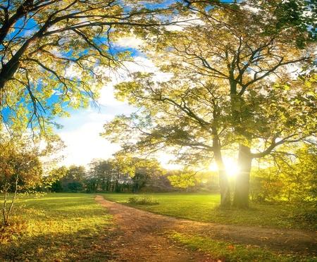 morning sun: Autumn park natural landscape Stock Photo