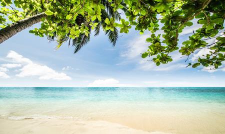 seascape: Tropical beach seascape beautiful nature