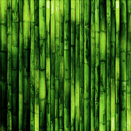 Bamboo wall. Green nature background