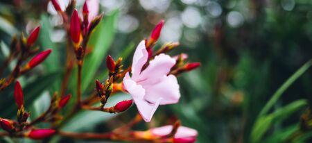 Flower leaves park. Botanical garden macro closeup