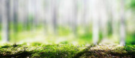 Wild trees in forest. Summer green landscape Stok Fotoğraf