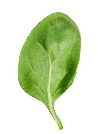 Spinach leaf