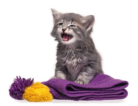 Little kitten Stock Photo - 16555424