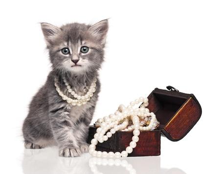 Cute kitten 写真素材