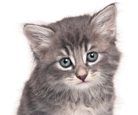 Cute kitten Stock Photo - 16668665