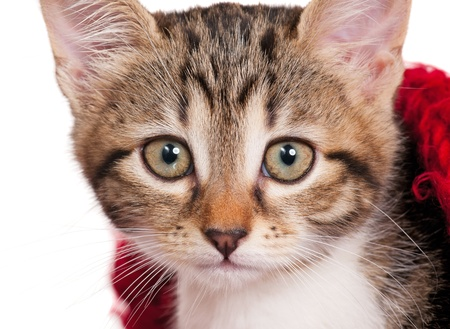 Little kitten Stock Photo - 17259689