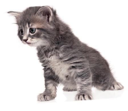 Cute kitten Stock Photo - 17662504
