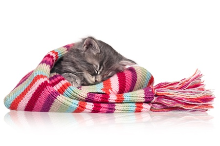 Asleep kitten Stock Photo