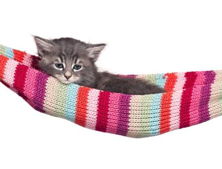 Little kitten Stock Photo - 17774582