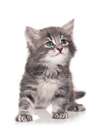 Little kitten Stock Photo - 17774546