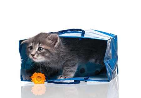Little kitten Stock Photo - 17774527