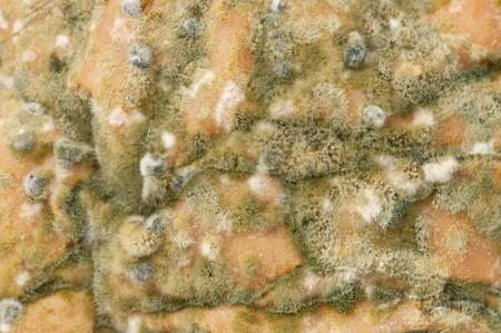 vile: Vile mold