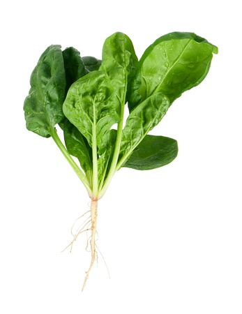 Fresh spinach Imagens