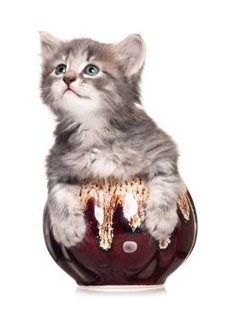 Little kitten Stock Photo - 17952616