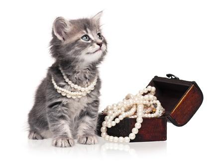 진주와 새끼 고양이 스톡 콘텐츠