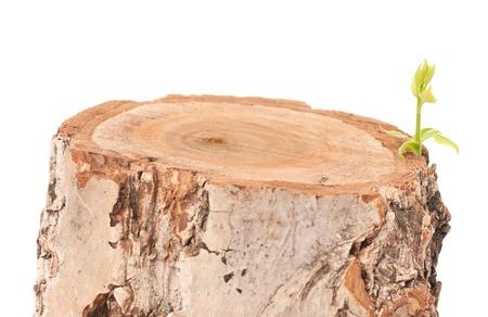 boughs: Tree stump