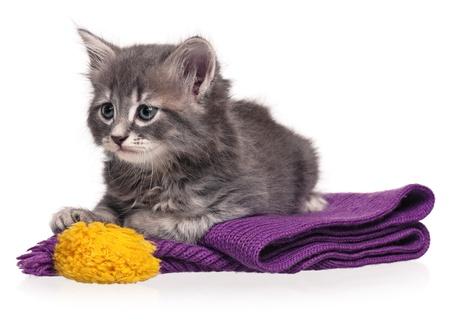 Little kitten Reklamní fotografie - 19113653