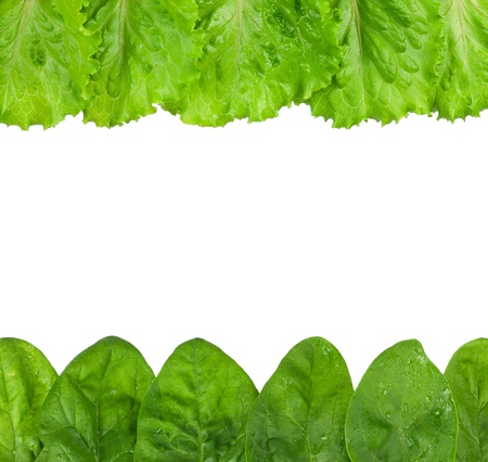 Rowed spinach Stock Photo