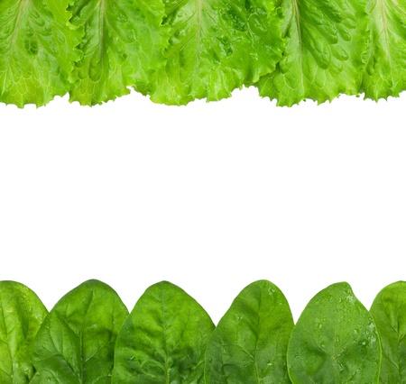Rowed spinach Reklamní fotografie