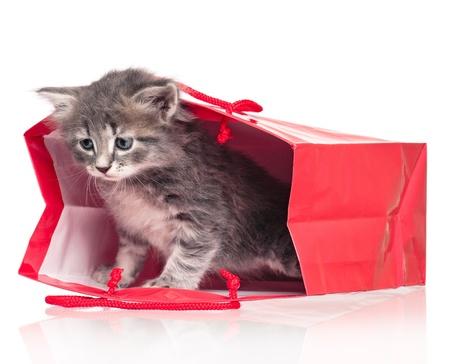 Cute kitten Stock Photo - 19691561