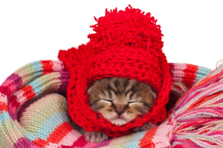 Neonate kitten on a warm knitted scarf over white background Stock Photo - 22850254