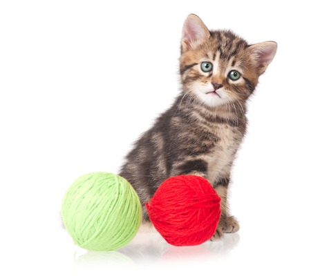 Cute little kitten with balls of color threads on white background cutout photo