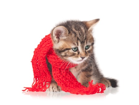 흰색 배경에 고립 된 목의 둘레에 묶여 스카프와 아픈 고양이 스톡 콘텐츠