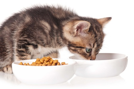 Cute kitten with bowl for a forage over white background Reklamní fotografie - 22848115