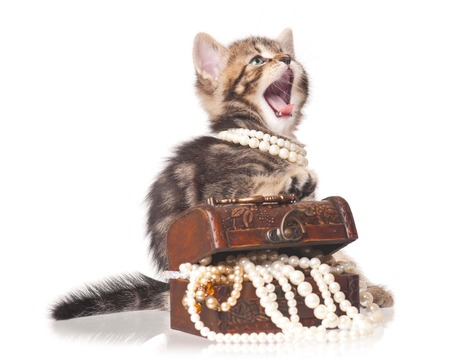 Fashionable kitten protects a wooden chest with pearls isolated on white background Stock Photo - 22847956