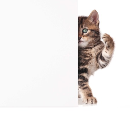 Cute kitten with a blank billboard for your text over white background photo