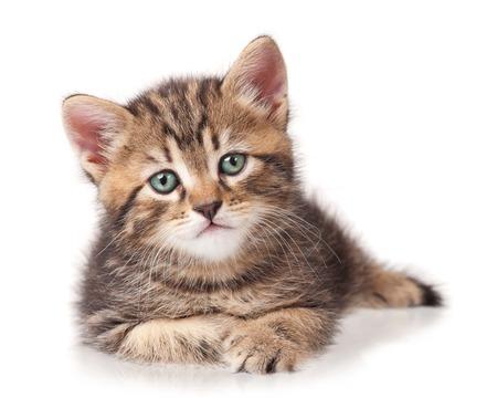 Seus cute kitten isolated on white background cutout Stock Photo - 22847843