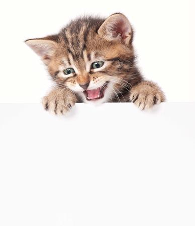 Cute little kitten with blank billboard on white background