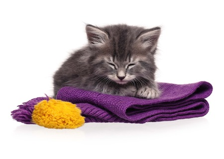 Cute asleep kitten on a warm knitted scarf isolated on white background photo