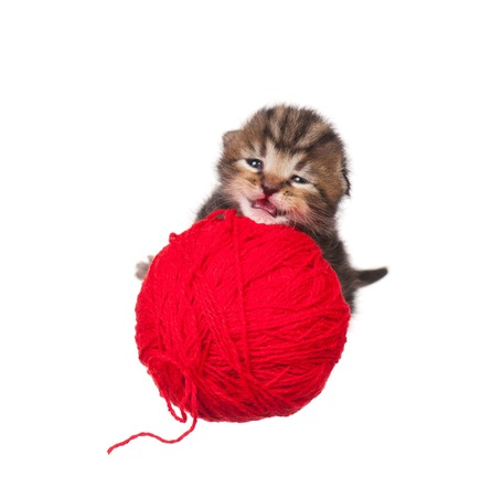 neonate: Cute neonate kitten with red yarn threads ball isolated on white background Stock Photo