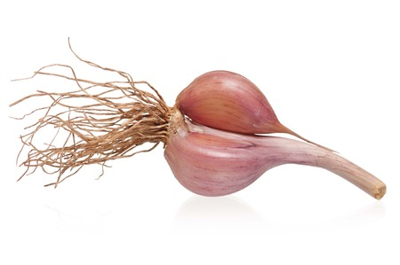 clean artery: Garlic bulb with roots isolated on white background cutout