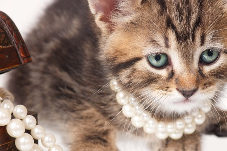 Fashionable kitten with pearls on white background close-up