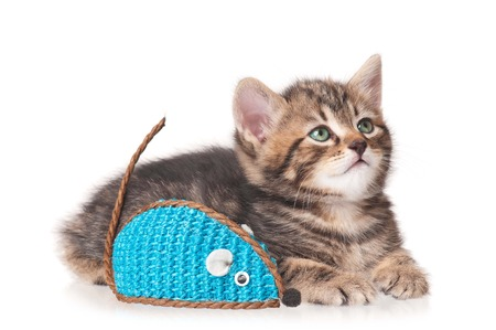 Cute little kitten with toy mouse isolated on white background photo