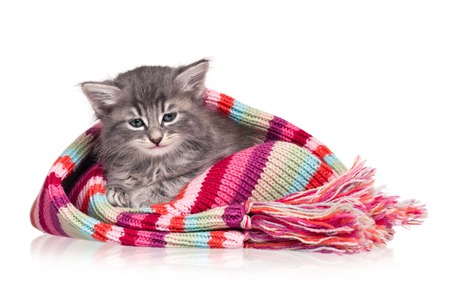 Cute kitten in a warm knitting scarf over white background