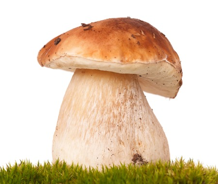 Beautiful cepe on a green moss. Focus on the mushrooms body photo