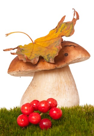 cepe: Beautiful cepe on a green moss. Focus on the mushrooms cap Stock Photo