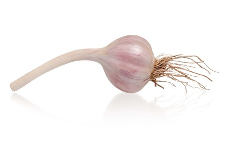clean artery: Garlic bulb with roots isolated on white cutout Stock Photo