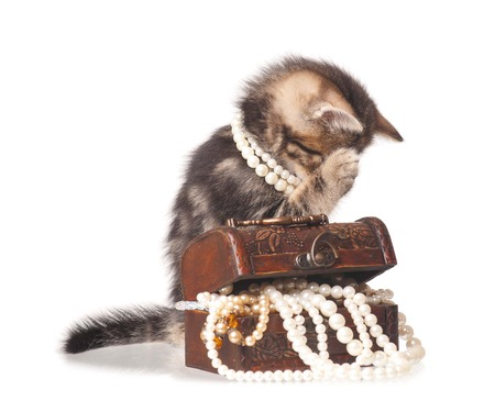 constraining: Constraining kitten with jewel box with pearl necklaces isolated on white