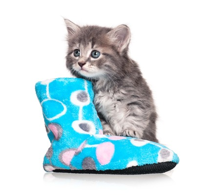 bootee: Cute little kitten near the fleece bootee isolated on white background