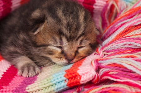 neonate: Neonate cute kitten on a warm knitted scarf close-up Stock Photo