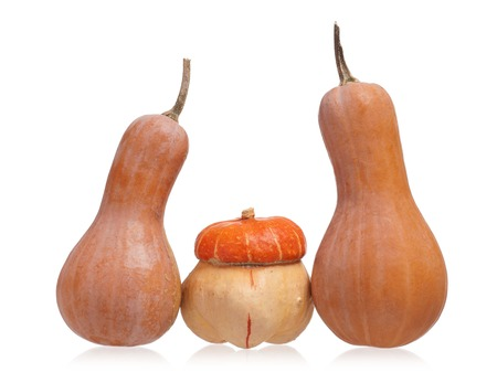 the oblong: Oblong and round decorative pumpkins isolated on white background Stock Photo